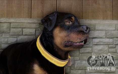 Rottweiler from GTA 5 для GTA San Andreas третий скриншот